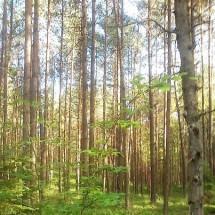 W kaszubskich lasach grzybów jest zatrzęsienie.