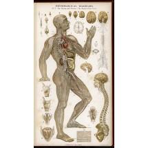 Kości pozwalają utrzymać odpowiednią postawę, są podstawowym elementem każdego stawu i na nich znajdują się miejsca przyczepu mięśni, stanowią ochronę dla organów wewnętrznych, są magazynem soli mineralnych.